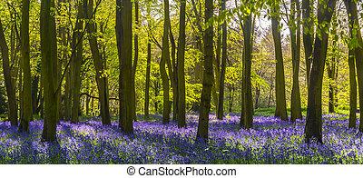 Sunlight casts shadows across bluebells in a wood - The sun...