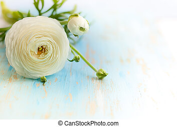 White ranunculus on vintage wooden background soft focus