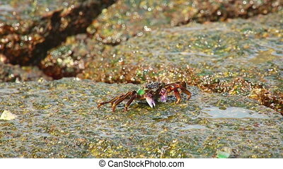 Crab on the rock, close-up