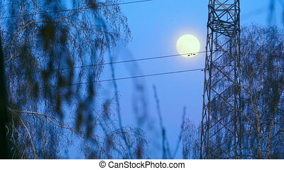 Full moon in evening sky and mast