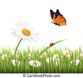 Nature summer daisy flower with butterfly. Vector illustration.