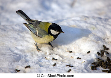 The titmouse on snow - The titmouse eats sunflower seeds on...