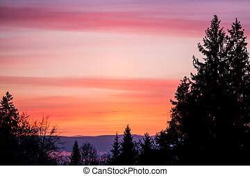 Beautiful sunset sky and tree silhouettes - Beautiful...