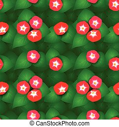 Seamless pattern with flowers ipomoea red star