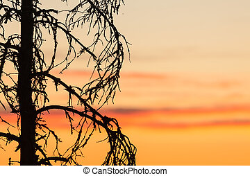 Sunset sky and tree silhouette - Beautiful sunset sky and...