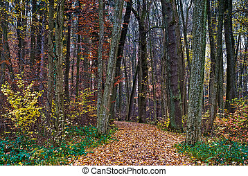autumn forest trail