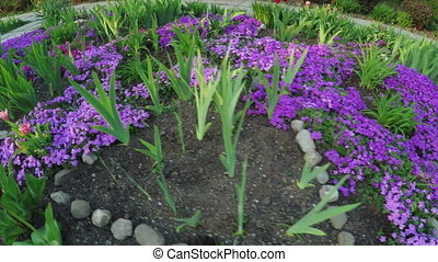 Sprouts garden flowers - In spring park shoots of garden...