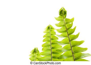 概念, 葉, 緑, 新たに, 新しい, 横列