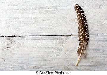 Pheasant feather on wood - Pheasant feather lying on a white...