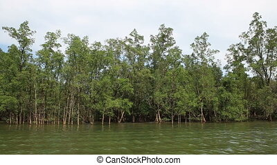 longtail boat drifts past trees growing from water -...