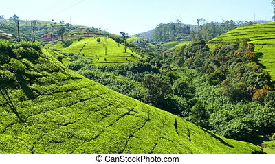 panorama of mountain tea plantation in Sri Lanka