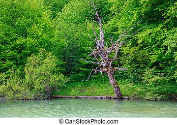 Plitvice Lakes National Park, Croatia - Plitvice Lakes...