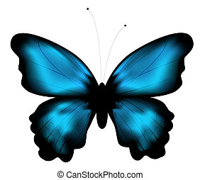 butterfly - beautiful blue butterfly in a white background