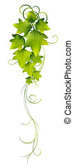 leaves - illustration drawing of beautiful green leaves with...