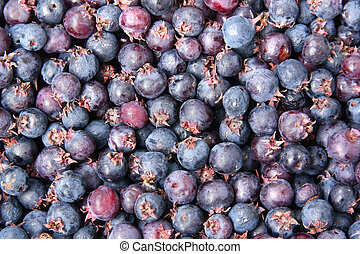 Background of Blueberry - Blueberries. Freshly picked...