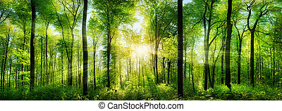 Forest panorama with rays of sunlight - Panorama of a scenic...