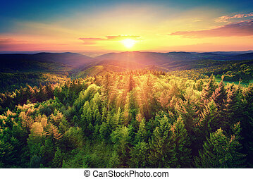 Scenic sunset over the forest