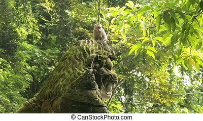 Monkey in the forest on the island of Bali, Indonesia