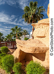 The tropical garden in Egypt - The tropical garden in Sharm...