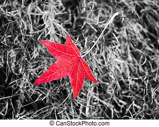Red autumn leaf - Beautiful red leaf lying on the grass with...