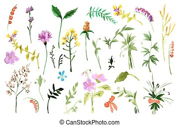Wild flowers collection Watercolor illustrations