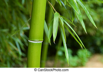 Bamboo - The close up of bamboo tree in forest