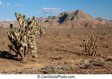 Sunny Afternoon in Joshua Tree Park in Northern Nevada -...