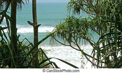 view of the ocean beach through coastal thickets