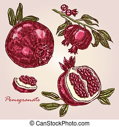 Collection of highly detailed hand drawn pomegranate. Pomegranate branch and fruit vector illustration. Eco food set