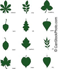 Set of silhouettes of leaves - Stock vector illustration set...