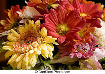 flowers - colorful flowers