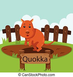 Illustrator of Quokka in the zoo