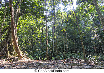 árbol, bosque