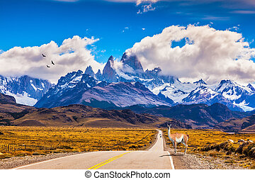 On the road is graceful guanaco - The highway crosses...