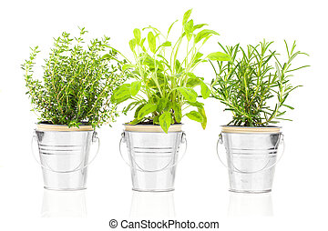 Sage, thyme and rosemary herb plant growing in a distressed...