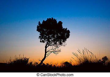 Silhouette tree sunset in Zakynthos island, Greece
