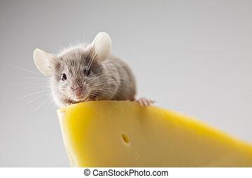 cierre, Arriba, en, poco, ratón,