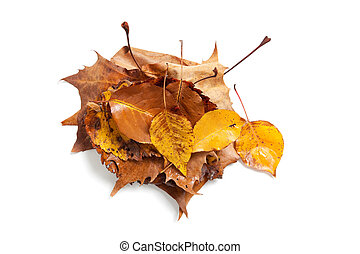 Stack of fall leaves on white