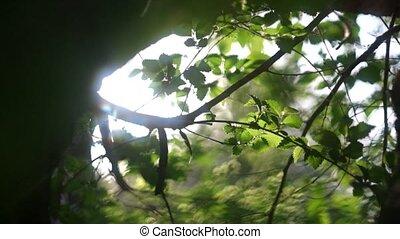 Spring happyness fresh crisp green leaves backlit - Spring...