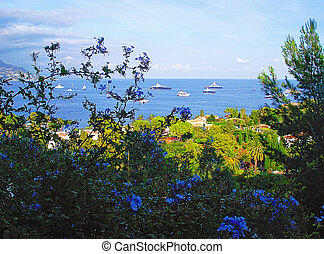panorama and blue flowers - Panoramic view on...