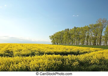 Spring trees in a field