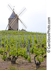 vineyards with windmill near Ch�nas, Beaujolais, Burgundy,...