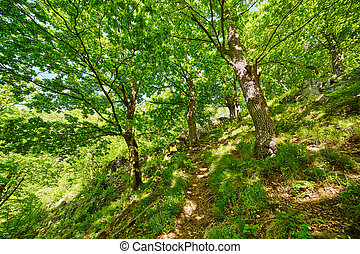 Mountain trail in the forest