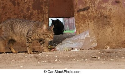 Homeless cat finding and run away UHD footage