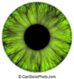 green iris - An illustration of a nice green iris texture