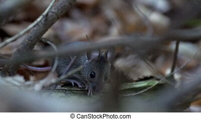 mouse in forest