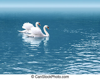 two swan - A photography of two white swan in love