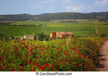 Summer landscape with red flowers and the rural house,...