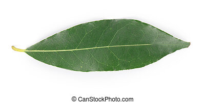 Bay leaf Isolated on a white background
