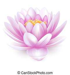 Water lily - Beautiful pink water lily or lotus flower...